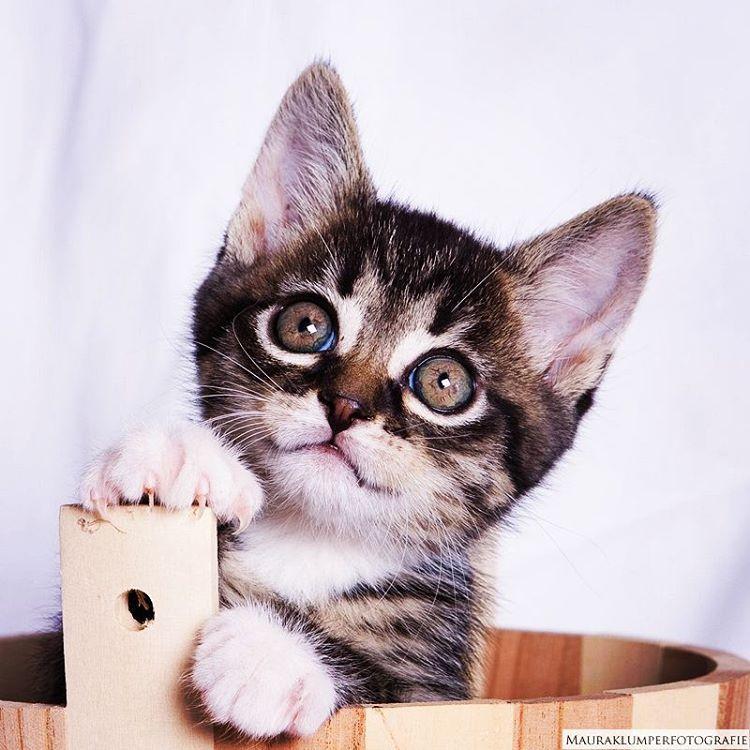 Kattenharen: Het enige nadeel van een kat in huis