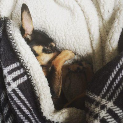 Hondje onder deken