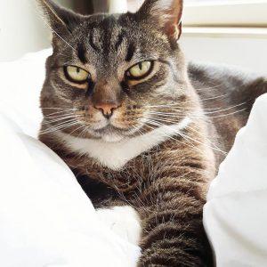 Mooiste kattenfoto's