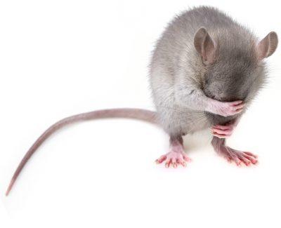 Goede doelen betalen voor dierproeven :(