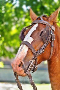 Bruin paard met oogkleppen
